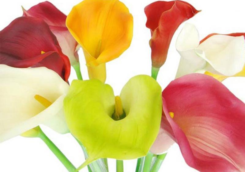 Calla Lily Flower-009