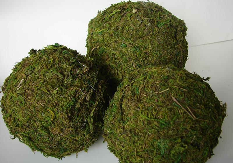Moss Balls-003