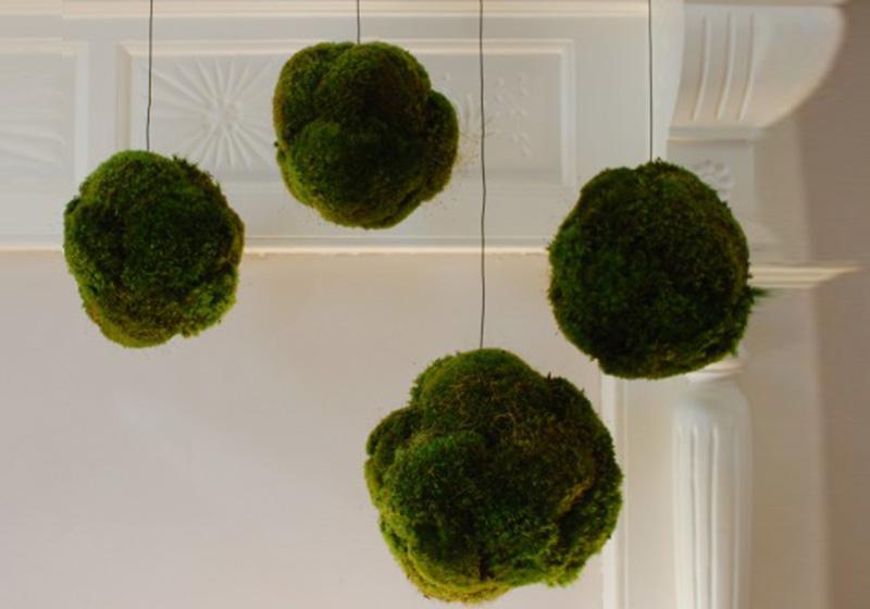Moss Balls-004