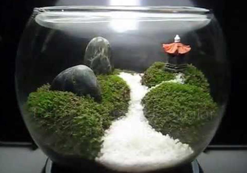 Moss Balls-006