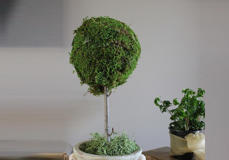 Moss Balls-008