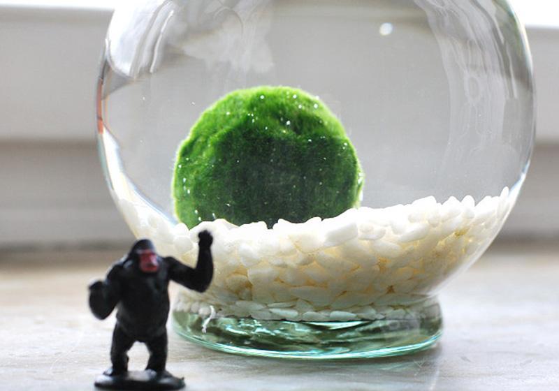 Moss Balls-009