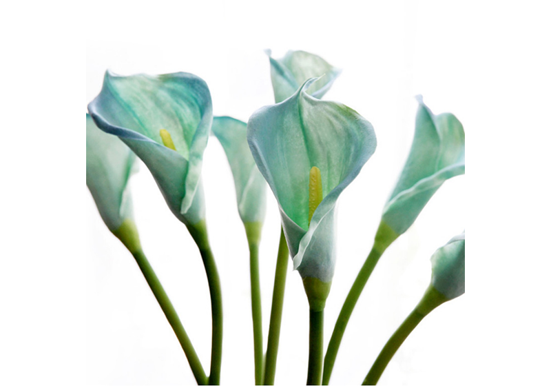 Calla Lily Flower-010