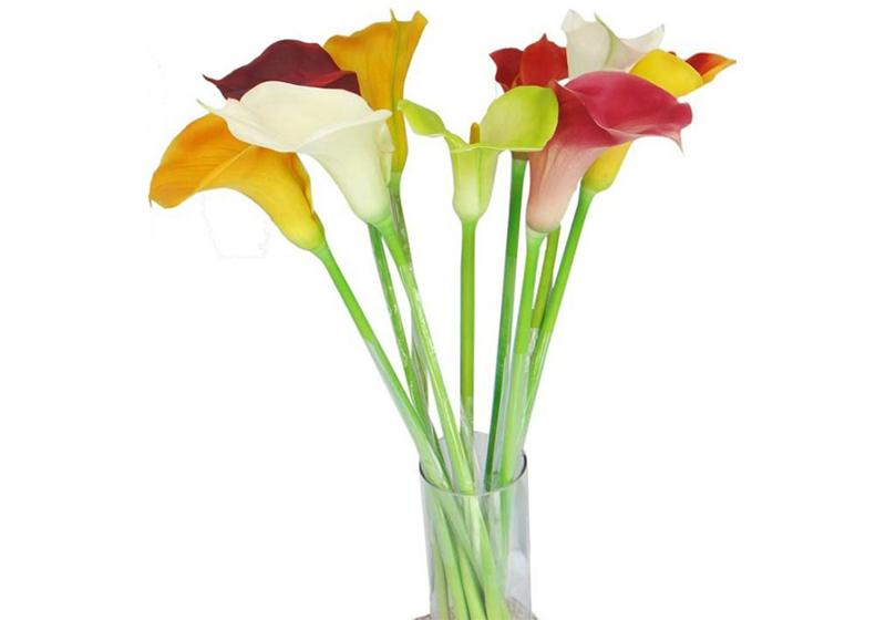 Calla Lily Flower-012