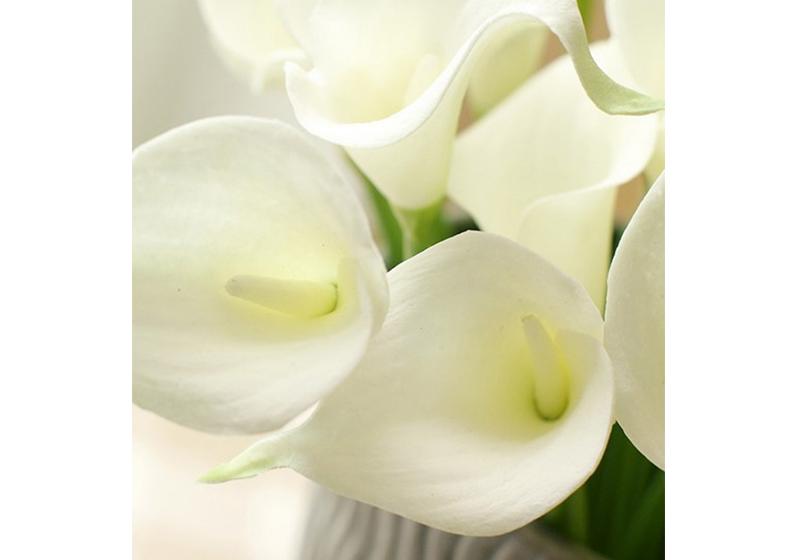 Calla Lily Flower-011